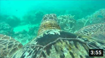 Amazing Turtle's Eye View of the Great Barrier Reef | WWF Australia